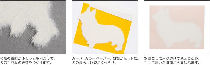 Washi犬